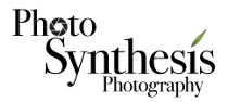 Photo Synthesis Photography